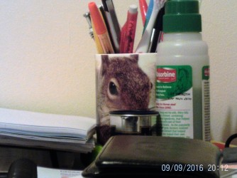 Random picture, perhaps it's important as it's a squirrel cup?