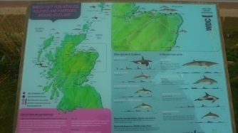 The different types of animals in the waters of Scotland